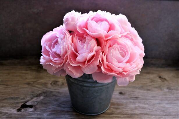 Comment planter un rosier en pot ?